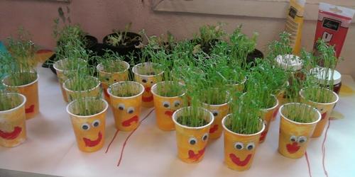 Faire pousser du blé ou des lentilles